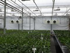 cosmicplant-7